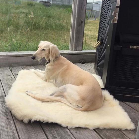 Hundedeckeweb